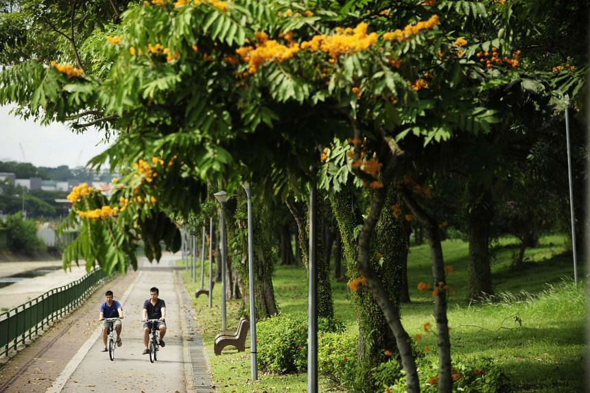 Two cyclists cruising along the Kallang Park Connector on Jul 20, 2013.