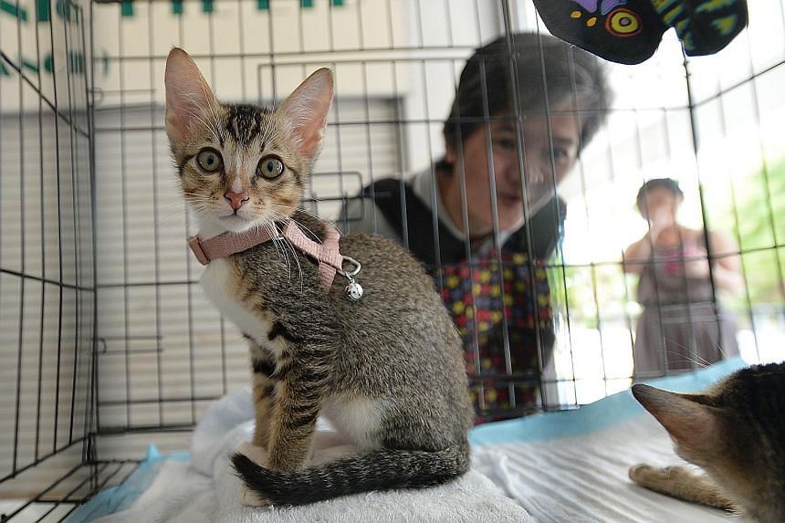 The cattery cares for 10 to 20 felines at any one time.