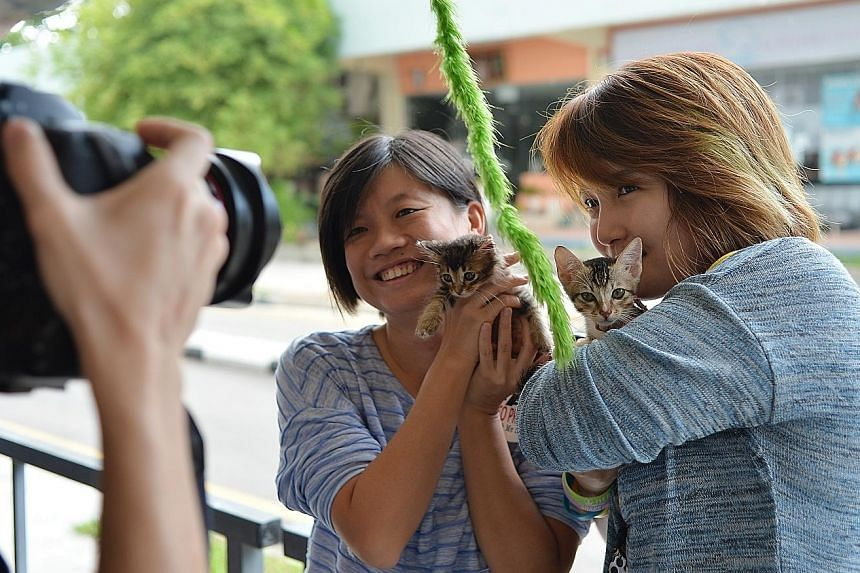 Ms Christina Toh, (left) and Ms Rachel Teoh get their picture taken with cats from the Love Kuching Project.