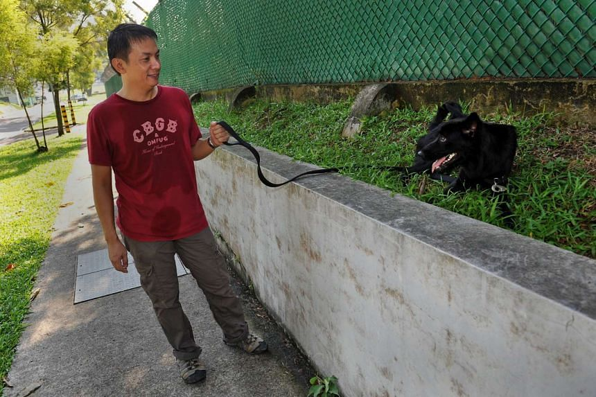 Walking the good-natured female cross-breed Midnight - all in a day's work as an animal shelter volunteer.