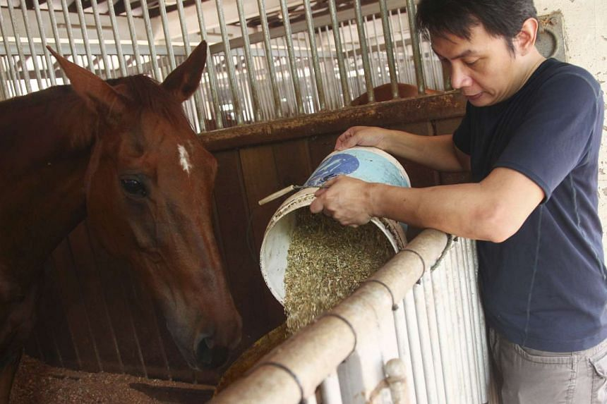 Giving the horse its customised mix of grain, hay and supplements.