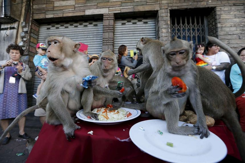 Visitors watching the macaques eating fruits during the annual Monkey Buffet Festival.