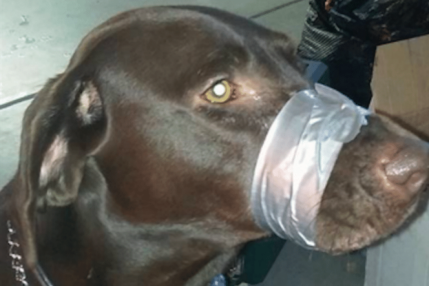 Katharine Lemansky posted a photo of her dog with its muzzle taped shut.