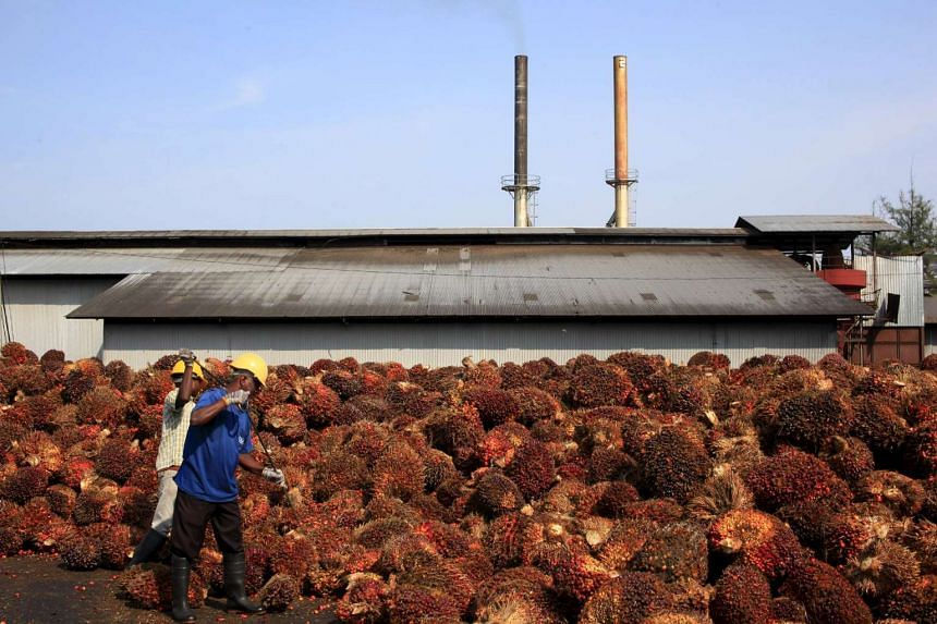 Workers collecting palm oil fruits inside a palm oil factory in Sepang.
