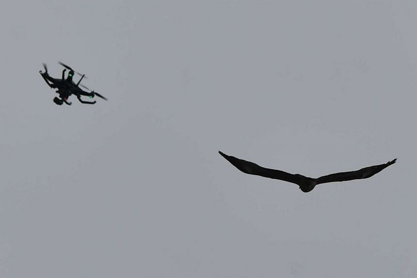 A bird flying next to a drone.