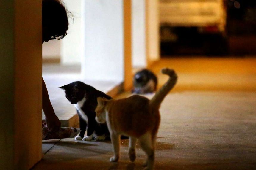 Cat feeders in Yishun have been patrolling the streets till 4am to make sure the strays are not harmed.
