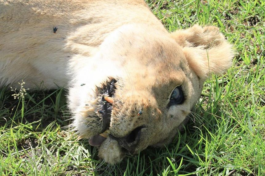 """Bibi (above) was found """"lying on her side, foaming at the mouth, fitting and panting"""" before she died."""