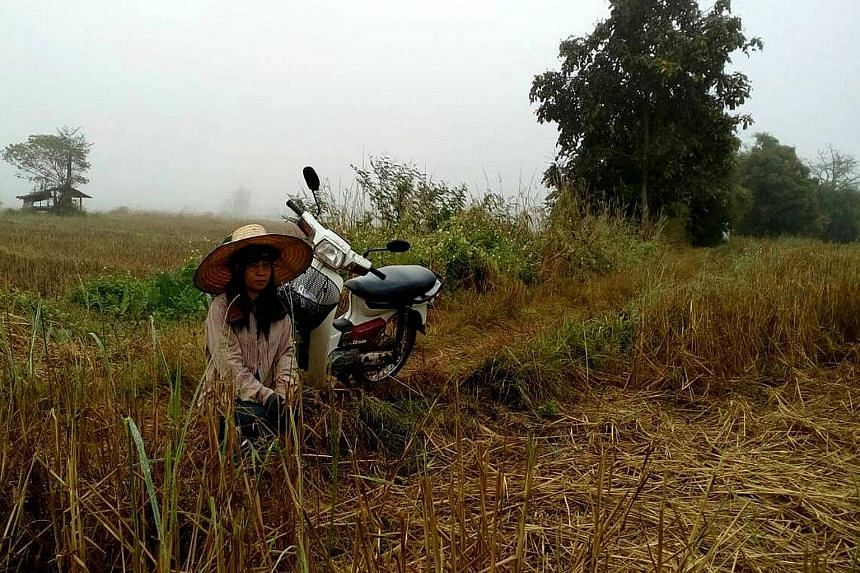 Ms Meena Chaimongkol, a 46-year-old single mother, says she has lost 70 per cent of her family's padi crop this year because of erratic water supply. To make up for the loss of income, she has resorted to going to Bangkok once a month to buy used clo