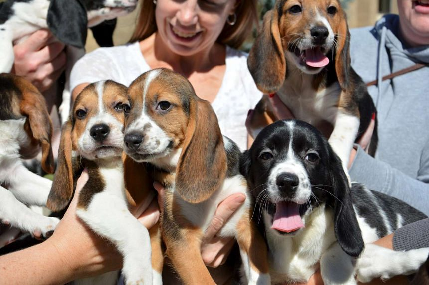 People holding puppies from the first litter born by in-vitro fertilisation.