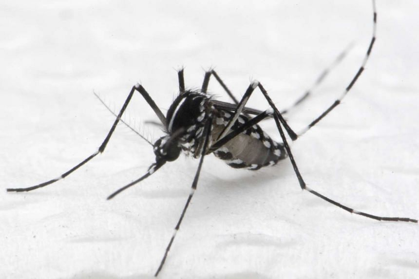 A 59-year-old woman living in Upper Thomson is the fourth person to die from dengue fever this year.