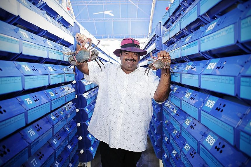 Gills 'N' Claws Aquaculture's vertical crab farm is the brainchild of owner Steven Suresh. The farm can house up to 40,000 Sri Lankan mud crabs.