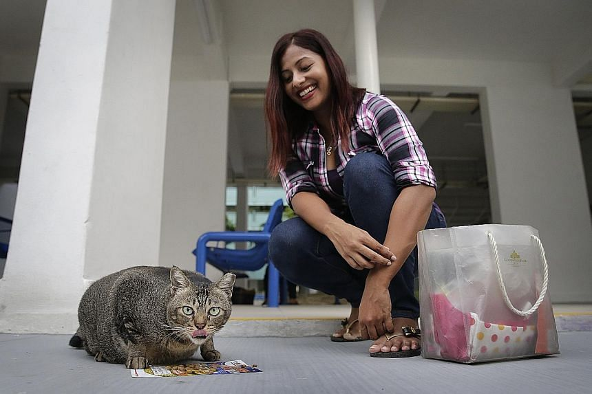 Ms Shelby Doshi, seen here feeding Fatty the cat, returns twice a week to Bedok, where she used to live, to feed and check on the community of cats there.