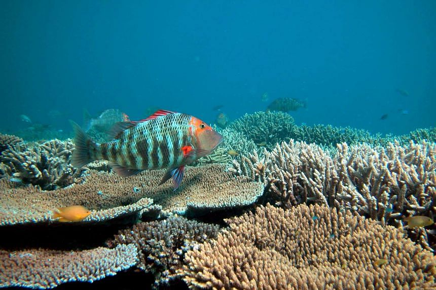 The Great Barrier Reef, the world's biggest coral reef, has been under increasing threat from climate change.