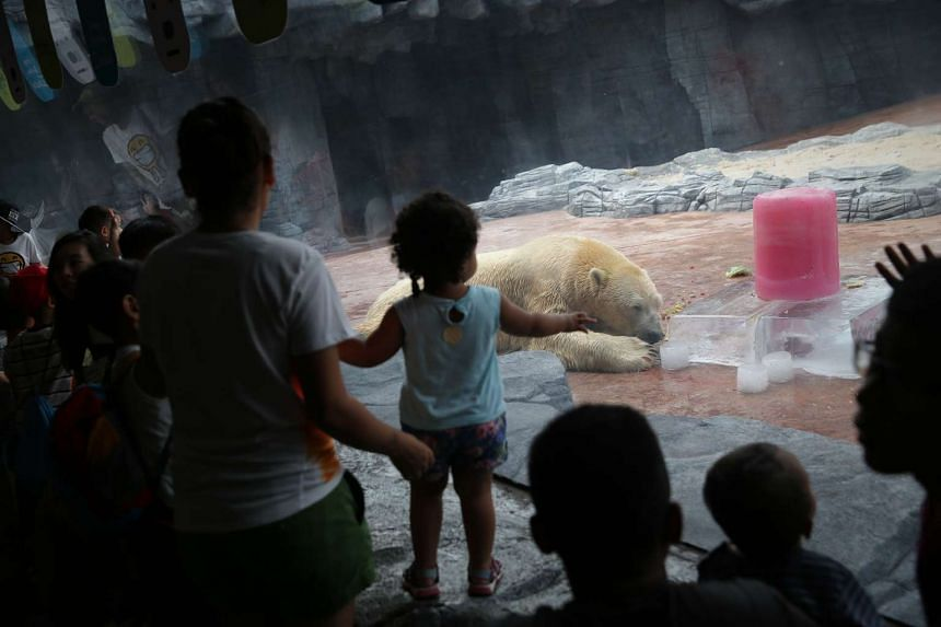 Visitors at the Singapore Zoo watching Inuka celebrate his birthday with a treat from the zookeepers.