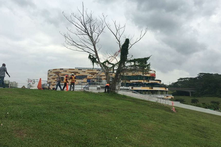 Workers prepare to remove Punggol's famous #instagramtree on Dec 16, 2015.