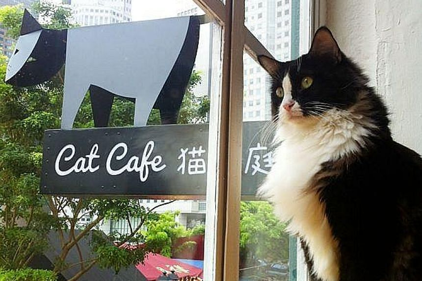 Neko no Niwa, a cat cafe in Singapore. The term 'cat cafe' was considered one of the top 10 most interesting food words of 2015 by The New York Times.