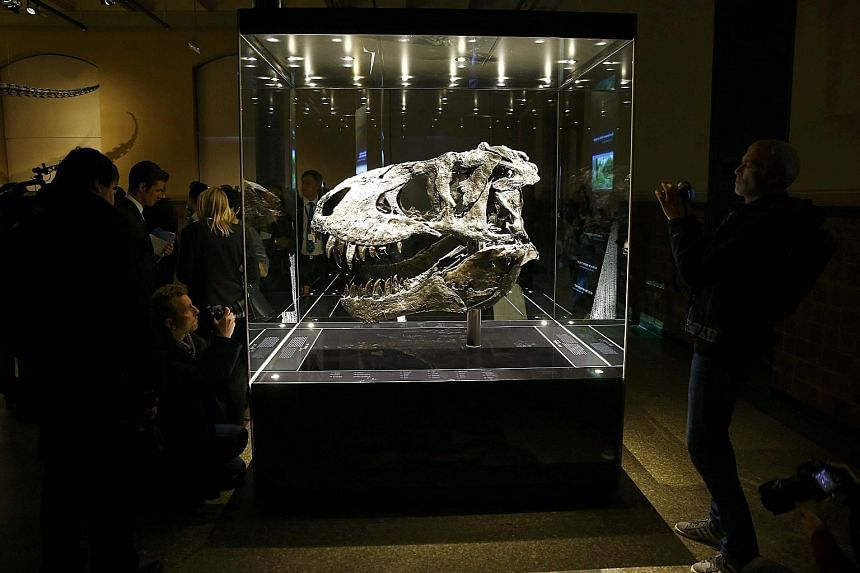 The skull of a Tyrannosaurus rex has gone on display at the Natural History Museum in Berlin, Germany. The fossil, which is about 70 million years old, was found in the US state of Montana in 2012. This is the first public exhibition of the skull, ni