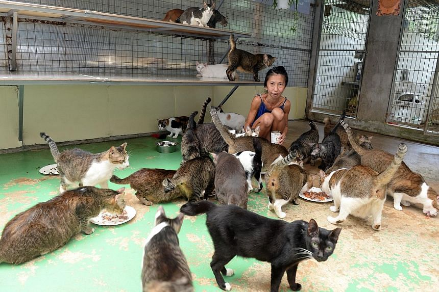 Ms Lily Low, 46, starts each day in the shelter before the sun is up, disinfecting the cats' living quarters, cleaning their drinking bowls and making sure they are fed and healthy.