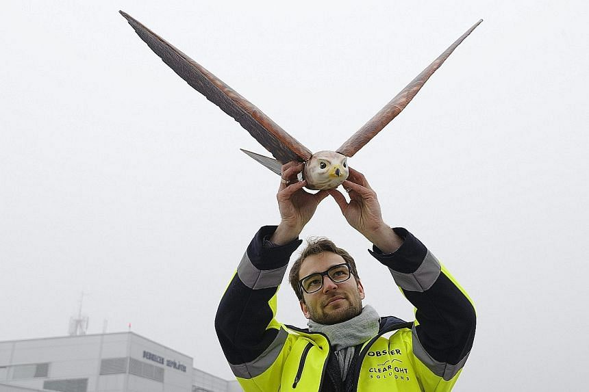 An expert from Dutch Clear Flight Solutions company with a falcon-shaped drone at the Debrecen International Airport, 226km east of Budapest in Hungary, on Tuesday. The XANGA Group, which operates the airport, put two kinds of drones to test, to exam