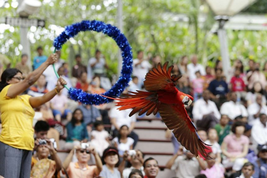 Jurong Bird Park turns 45 on Jan 3, 2016, and will be giving 45 per cent off park admission for Singapore residents.