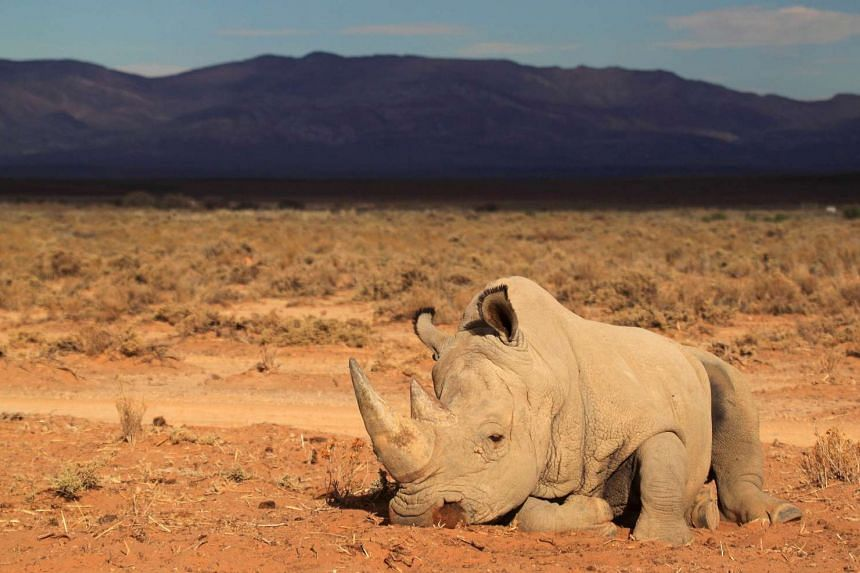 Tanzania has sentenced four Chinese men to 20 years in jail for smuggling rhino horns.