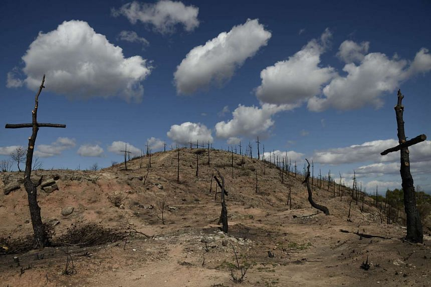 Wildfires destroyed more than 54,000ha of agricultural and forest land in Spain this year, including this area in Sant Salvador de Guardiola in July, which was  transformed into a cemetery of 200 crosses made with charred trees by firefighters.