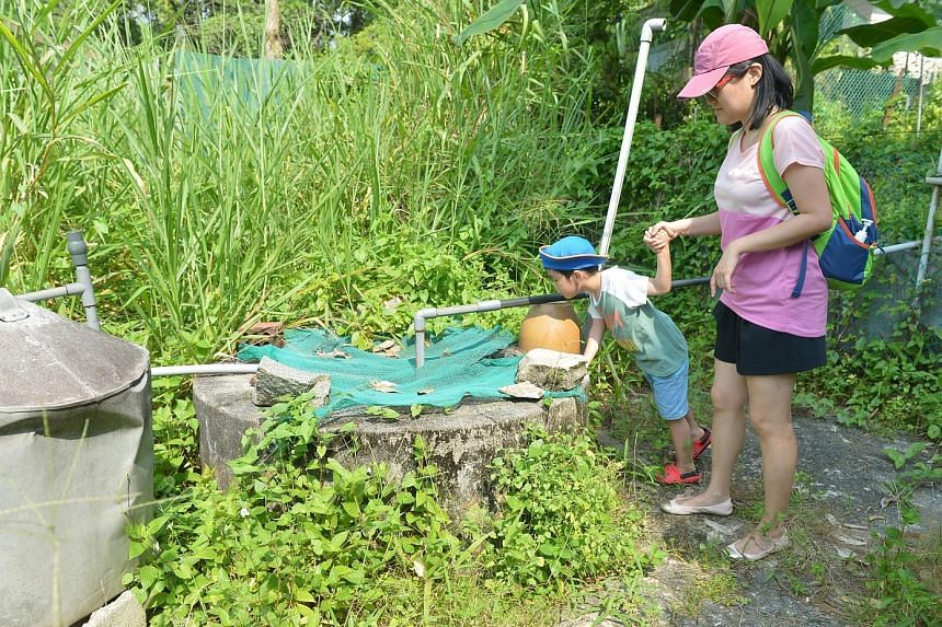 Ms Goh Lai Guat (far right), 60, and her sister pushing trolleys of supplies and bottled water to their food stall on Pulau Ubin after an advisory from the authorities on the usage of well water. Top, visitors looking at a well which is covered to pr