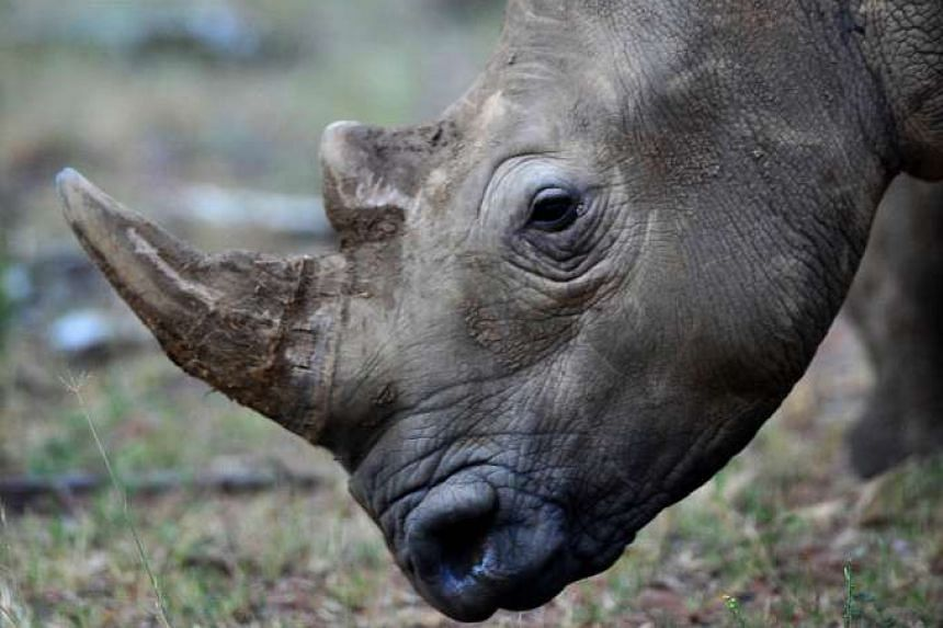 South Africa expelled a North Korea diplomat for alleged illegal trading in rhino horns.