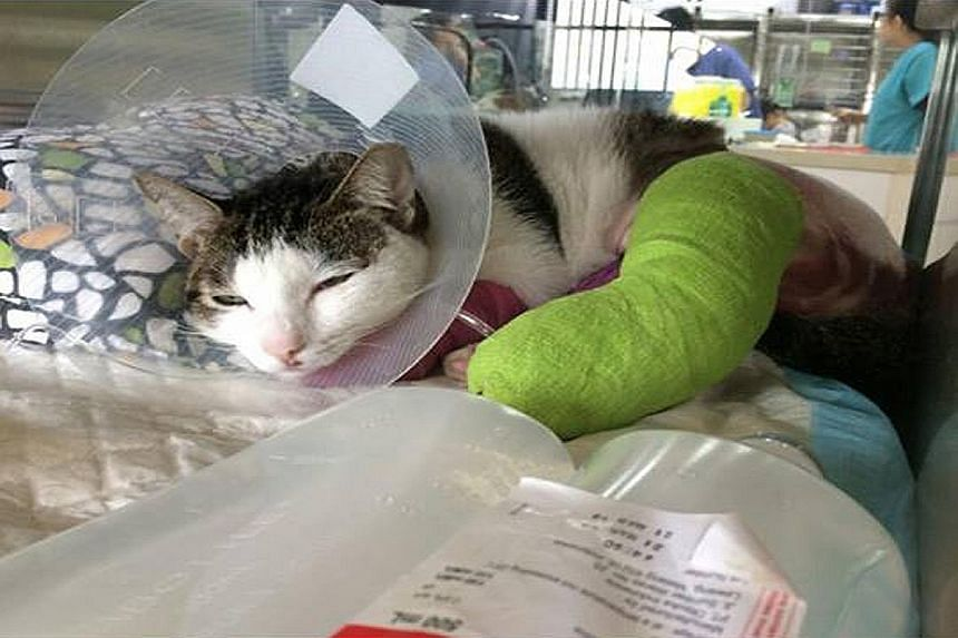 Oli was found under a car with two broken legs at Block 170, Yishun Avenue 7, last Friday. Its injuries are believed to have been deliberately inflicted. Sixteen cats - mostly strays - have been found dead and one injured in the estate in the last th