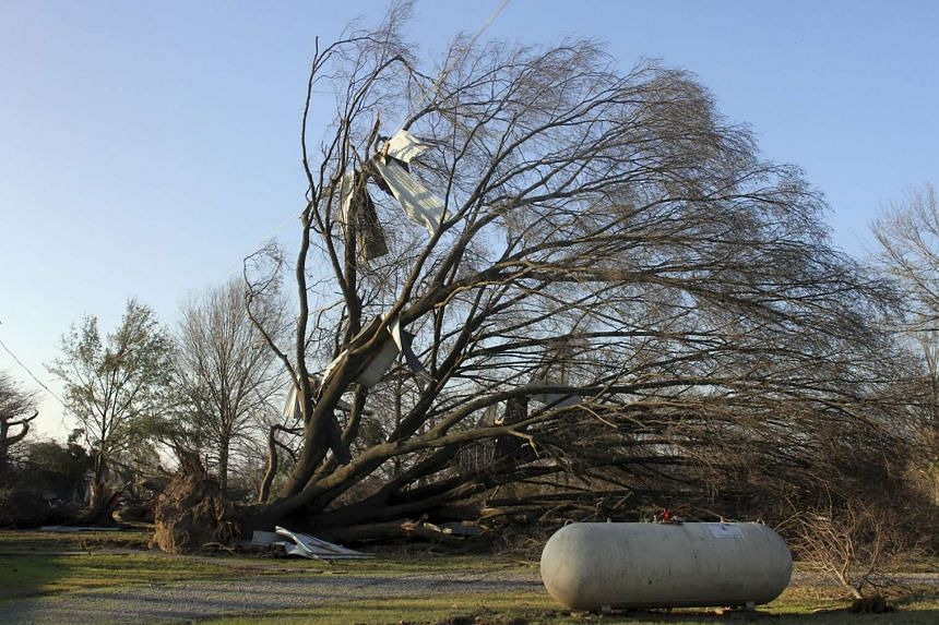 A large tree is uprooted after a powerful tornado struck Clarksdale, Mississippi on Dec 24, 2015.