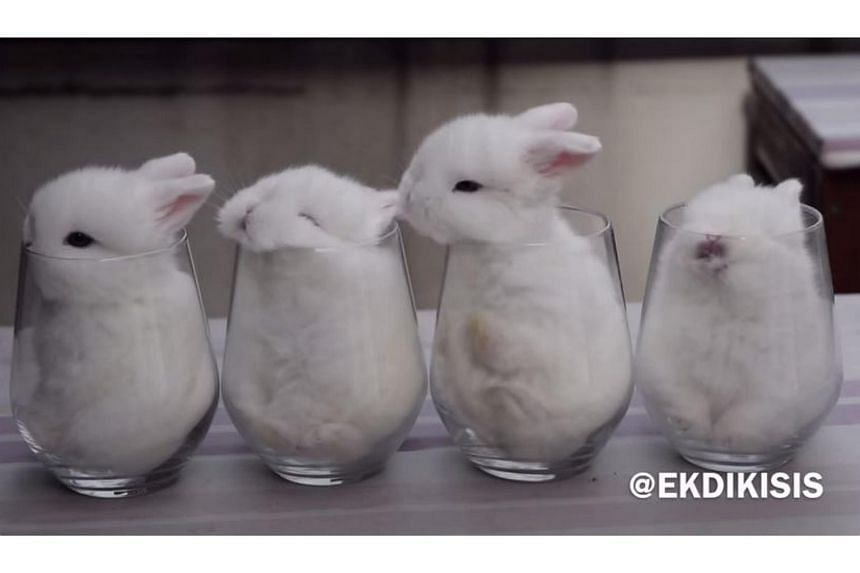 The video of four baby bunnies placed in drinking glasses was picked up by US humour site Break and has been viewed some 99 million times.