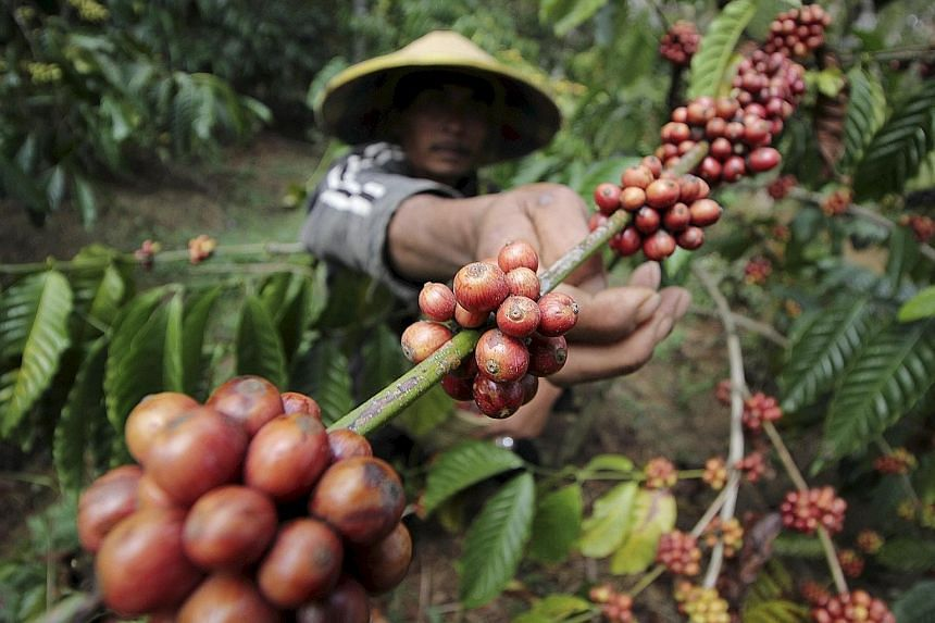 A coffee farmer in Indonesia. Noble has announced the disposal of a 49 per cent stake in its agribusiness.