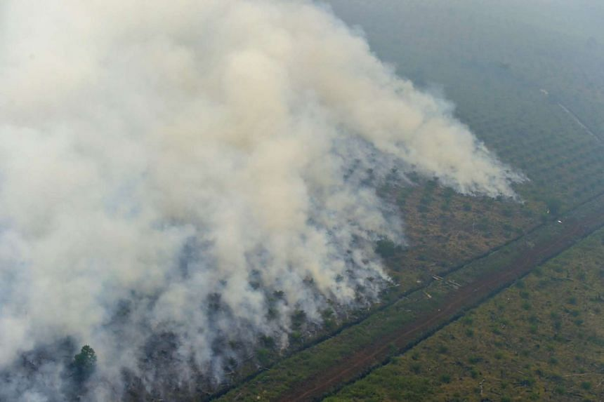 This file picture taken on Sept 17 shows fires burning at a concession area in Pelalawan, Riau province.