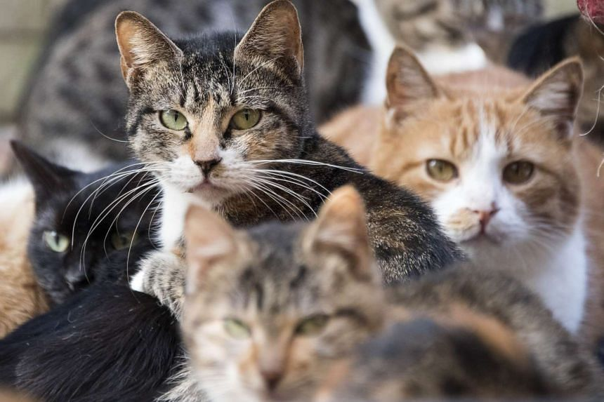 Cats are more affected by dogs, which can take in significant amounts of smoke, the university study showed.