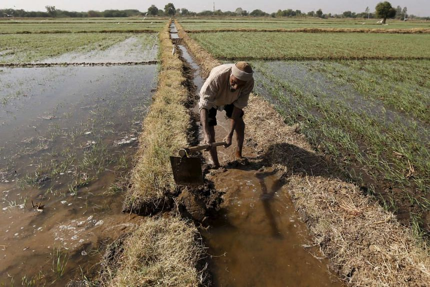 A farmer channels water to irrigate his wheat field on the outskirts of Ahmedabad, India, on Dec 15, 2015.
