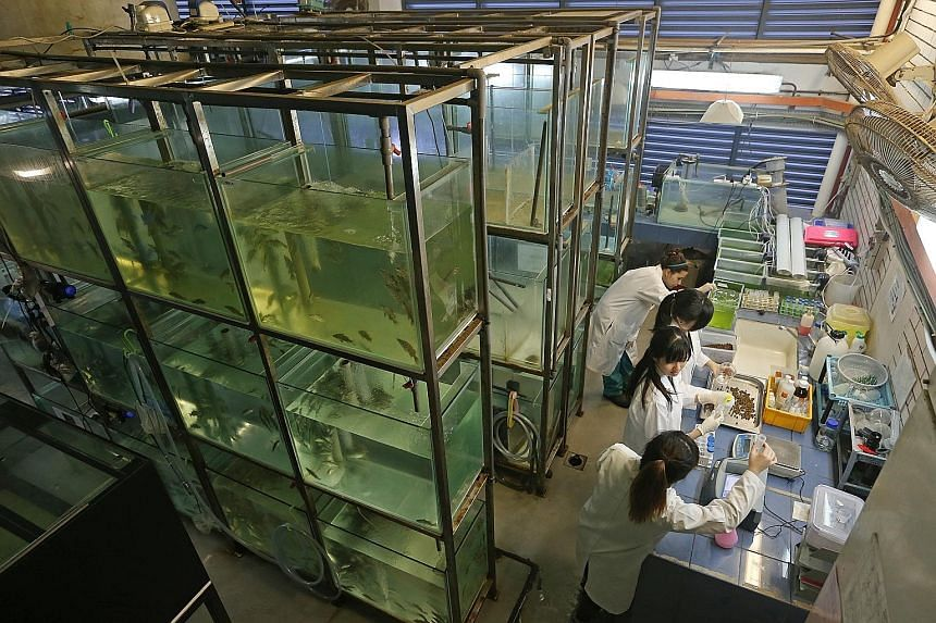 SkillsFuture Credit can be used for Temasek Polytechnic's fish nutrition course, which is useful to those working in fish farms as well as people who keep aquariums at home.