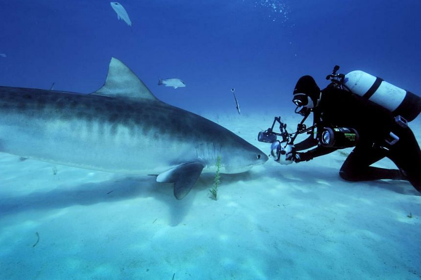 A close encounter with a tiger shark in the Bahamas during one of underwater photographer Brian Skerry's assignments.