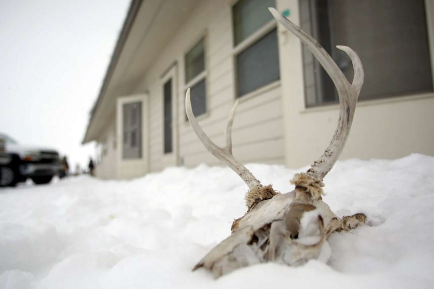 A skull of a deer is seen in front of the residential building at the Malheur National Wildlife Refuge near Burns, Oregon.