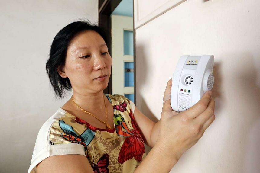 Some residents like Ms Tan Han Nee use an electronic plug-in insect repellent, while others resort to keeping their windows closed at all times.