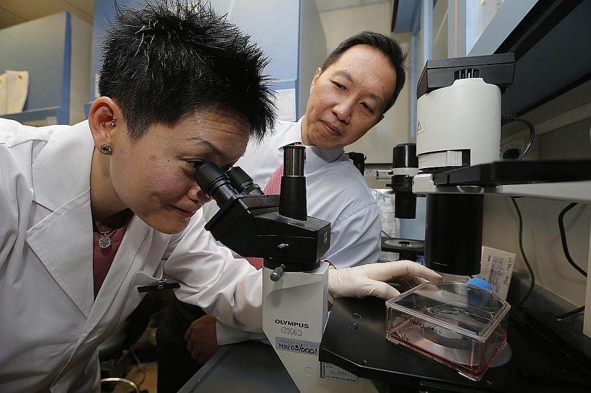 Dr Tang (far left) and Prof Ang at NNI's research lab. (Below) Glioblastoma cells as seen using a sophisticated technique called confocal microscopy, where the colours correspond to different proteins responsible for tumour spread.