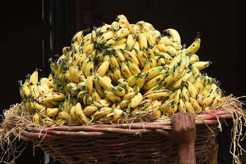Indian police force-fed a thief 40 bananas over the course of a day after he had swallowed a gold chain and an enema failed to have the desired effect.