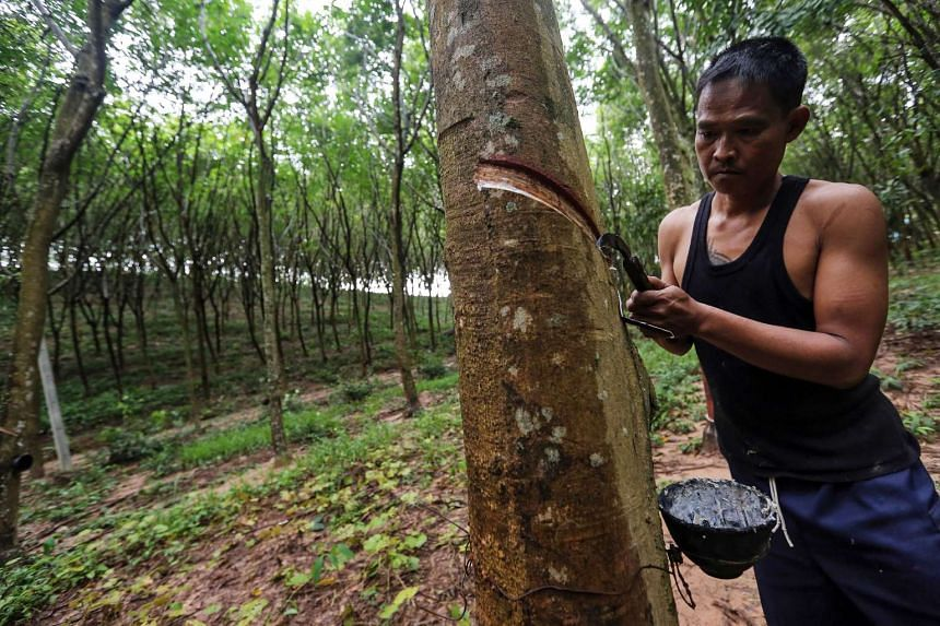 A farmer taps his rubber tree at a farm in Klaeng district, Rayong province, Thailand, on Oct 27, 2015.