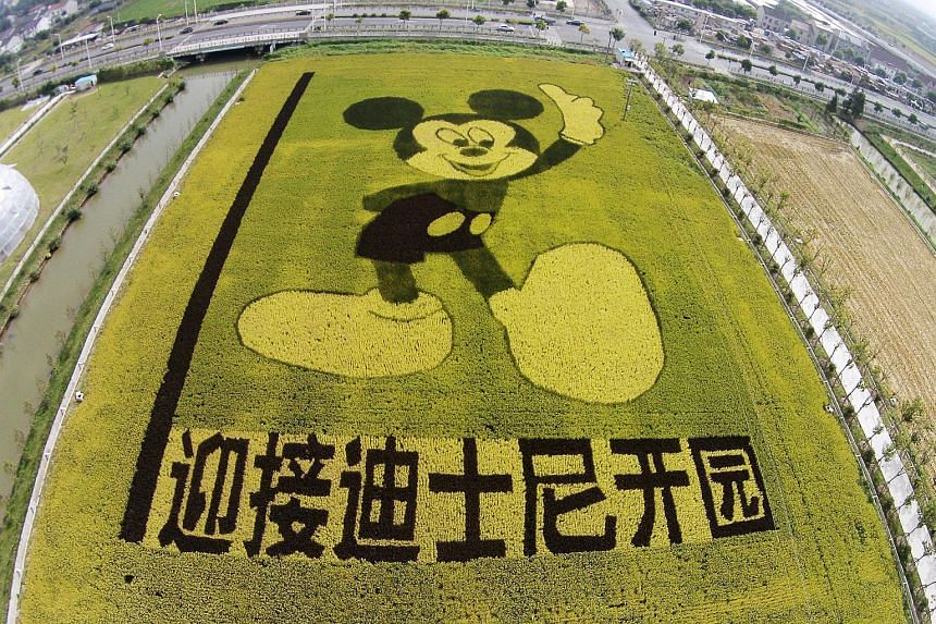 An aerial view of rice plants in the shape of Mickey Mouse to celebrate the Shanghai Disney Resort, which will open on June 16, 2016.