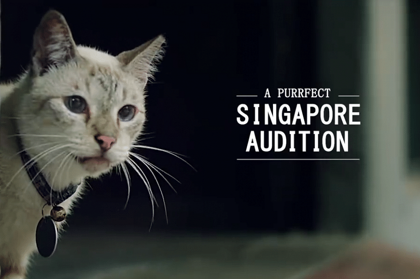 In the Singapore Tourism Board's latest promotional video, viewers witness the sights and sounds around Singapore from the eyes of smoky-beige cat Didi.
