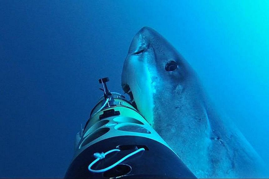 The Remus logged 30 interactions with 10 sharks.