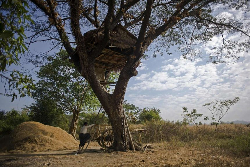 A man climbing up to a tree house at the Kyauk Ye village on the outskirts of Yangon.