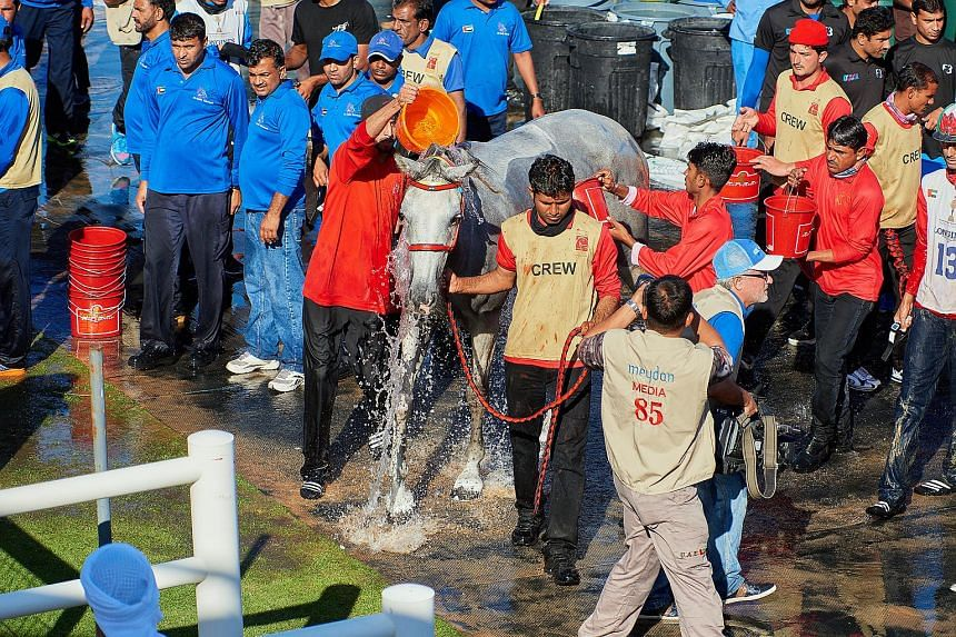 Horses are doused with cold water to lower their body temperature after returning from each loop of the 2016 HH Sheikh Mohammed Rashid Al Maktoum Endurance Cup.