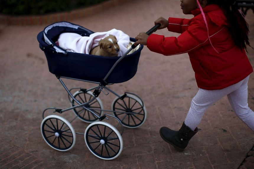 A girl pushes her dog in a pram after it was blessed by a priest in Benalmadena, near Malaga, Spain, on Sunday, Jan 17.