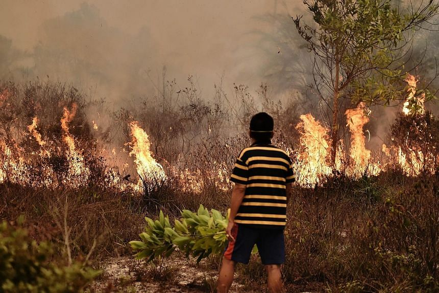 A peatland fire burning on the outskirts of Palangkaraya city, CentralKalimantan, last October. Local officials face the axe if they cannot control the spread of land and forest fires in their provinces.