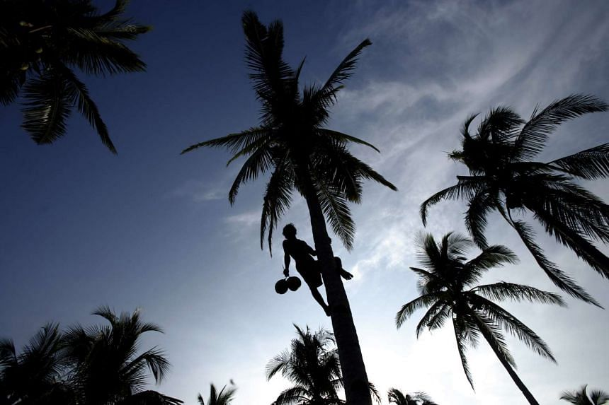 Goa's legislative assembly reclassified the coconut tree as a palm to make it easier to cut down those that had become dangerous.